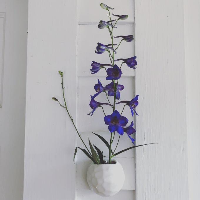 cavacats-planter-dephinium